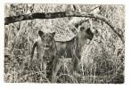 NIGER  /  LA  FAUNE  DU  WATERBUCK  /  LIONS  /  Collection  MOUREN , Niamey  N° 7 A - Niger