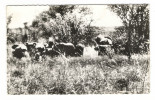 République  Du  NIGER  /   LA  FAUNE  ( Du WATERBUCK )  :  ELEPHANTS  /  Collection  MOUREN , Niamey - Niger