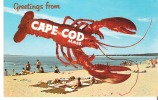 Greetings From Cape Cod - Cape Cod