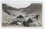 Homme Avec Ses 2 ânes Au Col De La Moutière à Saint-Dalmas-le-Selvage (Alpes-Maritimes) - Places