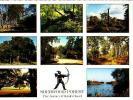 Nottingham  H133         ( 8 Views )  Sherwood Forest. The House Of Robin Hood - Nottingham