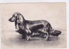 CARD CANE BASSOTTO BASSET SAUS- SAGE DOG TEDESCO  A PELO LUNGO  -FG-V-2 -0882--24325 - Chiens