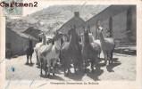 COMPANIA HUANCHACA DE BOLIVIA BOLIVIE LAMA 1900 - Bolivie