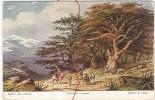 Künstlerkarte  Cedern Des Libanon , Cedars Of Libanon , Cédars Du Libanon - Ohne Zuordnung