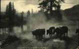N°1834 MMM 65  ALONG THE KETTLE RIVER NORTH OF SPOKANE - Spokane