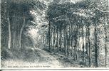 N°44083 -cpa Houlgate -unc Hemin Dans Le Bois De Boulogne- - Houlgate