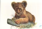 CPSM LION LIONCEAU ANIMAUX ED YVON ILLUSTRATEUR F ASLAN - Lions