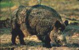 GERMANY A19/02 Animal: Pig - Wildschwein - A + AD-Serie : Pubblicitarie Della Telecom Tedesca AG