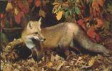 GERMANY A18/02 Animal: Fox - Mint - A + AD-Serie : Pubblicitarie Della Telecom Tedesca AG