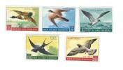Uccelli ,bird ; San Marino 1959, Posta Aerea ; Serie Completa ; Nuovi ; Cat. € 5,80 - Uccelli