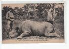 CENTRAFRIQUE - Chasse Au Rhinocéros Sur Les Rives Du Chari -  Très Bon état (étiquette Collée Au Dos) - Central African Republic
