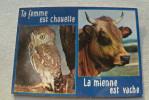Ta Femme Est Chouette La Mienne Est Vache - Animaux & Faune