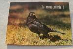 Tu Mens, Merle ! - Oiseaux
