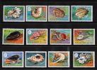 Aitutaki - 1974 Shells MNH__(TH-2403) - Aitutaki