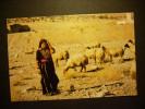 1977 CAMPESINO PASTOR SHEPHERD GIRL WITH HER FLOCK POSTCARD POSTAL AÑOS 70/80 - TENGO MAS POSTALES - Campesinos