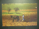 1978 CAMPESINO AGRICULTOR THE LIFE IN THE VILLAGE POSTCARD POSTAL AÑOS 70/80 - TENGO MAS POSTALES - Campesinos