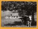 27 Eure Rosay Sur Lieure Maison Normande Avec Vaches - Otros Municipios