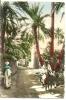 7-afri7. Postal Argelia. En El Oasis - Argelia
