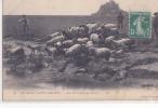 24570 Mont Saint Michel Prés-salés Des Grèves -LL 25 - Trois Enfants Berger Mouton