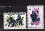 RWANDA 1970 MOUNTAIN GORILLA MONKEYS MONKEY - GORILLES - GORILLA DI MONTAGNA SCIMMIE SCIMMIA MNH - Rwanda