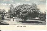 Carte Postale : China Tree , Aiken - Aiken