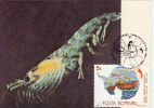ANTARCTIC WILDLIFE, ANTARCTIC KRILL, CM, MAXICARD, CARTES MAXIMUM, 1990, ROMANIA - Antarctic Wildlife