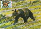BEAR, CM, MAXICARD, CARTES MAXIMUM, 1987, ROMANIA - Bären