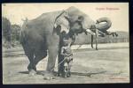 Cpa Du Sri Lanka  Ceylon Elephants  -- Ceylan   OCT09 - Sri Lanka (Ceylon)
