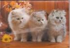 3 CHATS - Carte Musicale - Katzen