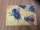 """Chromo (Image Scolaire) """"Mouche à Viande (grossie), Mouche (grossie)"""" (insecte) - Autres"""