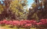 Azaleas And Oaks, Louisiana - Etats-Unis