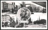 Pc Coventry, Lady Godiva Statue, Precinct And Cathedral - Coventry
