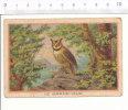 Le Grand Duc Hibou Oiseau / Owl Bird / IM 39/23 - Altri
