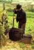 Gestes Et Paysages La Vigne - Paesani