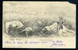 Cpa  Congo Belge Chasse Aux éléphants    OCT14 - Congo Belge - Autres