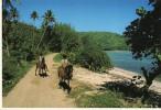 Tubuai - Chevaux - French Polynesia