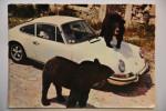 CPM SIGEAN (11. Aude) - Réserve Africaine De Sigean - Ours Du Tibet Sur Une Porsche - Sigean