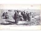 24759 EGYPTE Egypt - Beduins Cultivating The Farm Oasis Of Sakkara Desert - Agriculture  -Modiano  Milano 7031 - Egypte