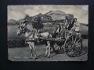 Costumi - Folklore - Costumi Siciliani - Costume Siciliano - Carretto Siciliano - Viaggiata 1963 - Costumi