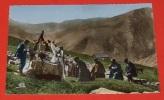 Les Alpes Pittoresques - La Messe Des Bergers En Haute Montagne ::: Animation - élevages - Religions  ------------- 310 - Crías