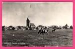 """Ameland - Gezicht Op Hollum - Vaches - HET ARENDSNEST - Cachet """" Leeuwarden """" - Ameland"""