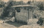 AFRIQUE - ALGERIE - TIPAZA - Sarcophage Romain - Algérie