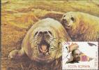 29336- ANTARCTIC WILDLIFE, HARBOUR SEAL, PENGUINS, MAXIMUM CARD, 1990 , ROMANIA - Antarctic Wildlife