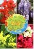 Var Géographique - Dites Le Avec Des Fleurs (sous Le Ciel De Provence N°250) - Frankrijk