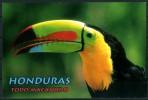 """HONDURAS - Todo Macanudo - """"Tucan"""" - Cartolina Non Viaggiata Come Da Scansione - Honduras"""