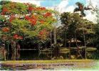 ILE MAURICE     H6     Jardin Botanique De Pamplemousse - Mauritius