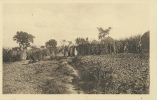 Ruanda-Urundi - Kraai De Muhutu - 101 - Ruanda-Urundi