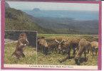 7 SUPERBES CARTES DE L' ILE MAURICE - Mauritius