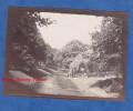 Photo Ancienne - BADEN BADEN ( Baden Wurttemberg ) - Lichtentaler Allee - L' Oos - 1904 - Deutschland - - Photographs