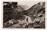 REF 232 CPA Gap Of Dunkee Killarney Berger Avec Moutons - Ecosse